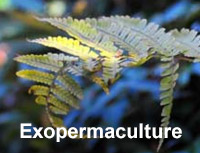 EXOPERMACULTURE
